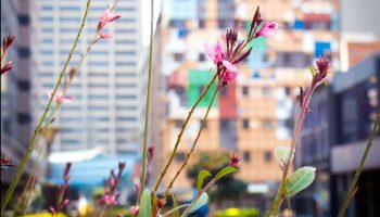 DRIFT A framework for assessing and implementing the co-benefits of nature-based solutions in urban areas