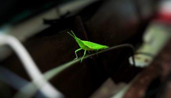 DRIFT Webinar: Preserving bio-productivity & biodiversity: Transformational Challenges