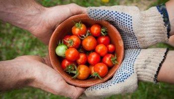 DRIFT Welke nieuwe businessmodellen geven de landbouw toekomst?